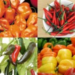 Types of Chili Peppers7
